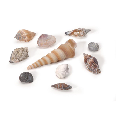Floral Seashell Assorted Small Natural 500 Grams