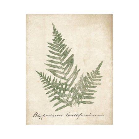 Vintage Ferns XI no Border Print Wall Art By Wild Apple