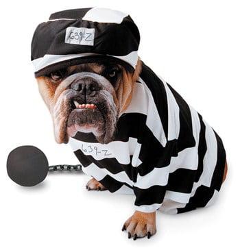 Zelda Wisdom - Prisoner Dog Costume