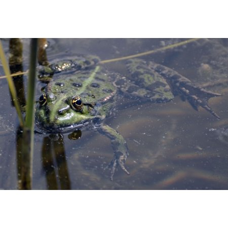- Framed Art for Your Wall Frogs Pond with Frogs Green Water Frog Pond 10x13 Frame