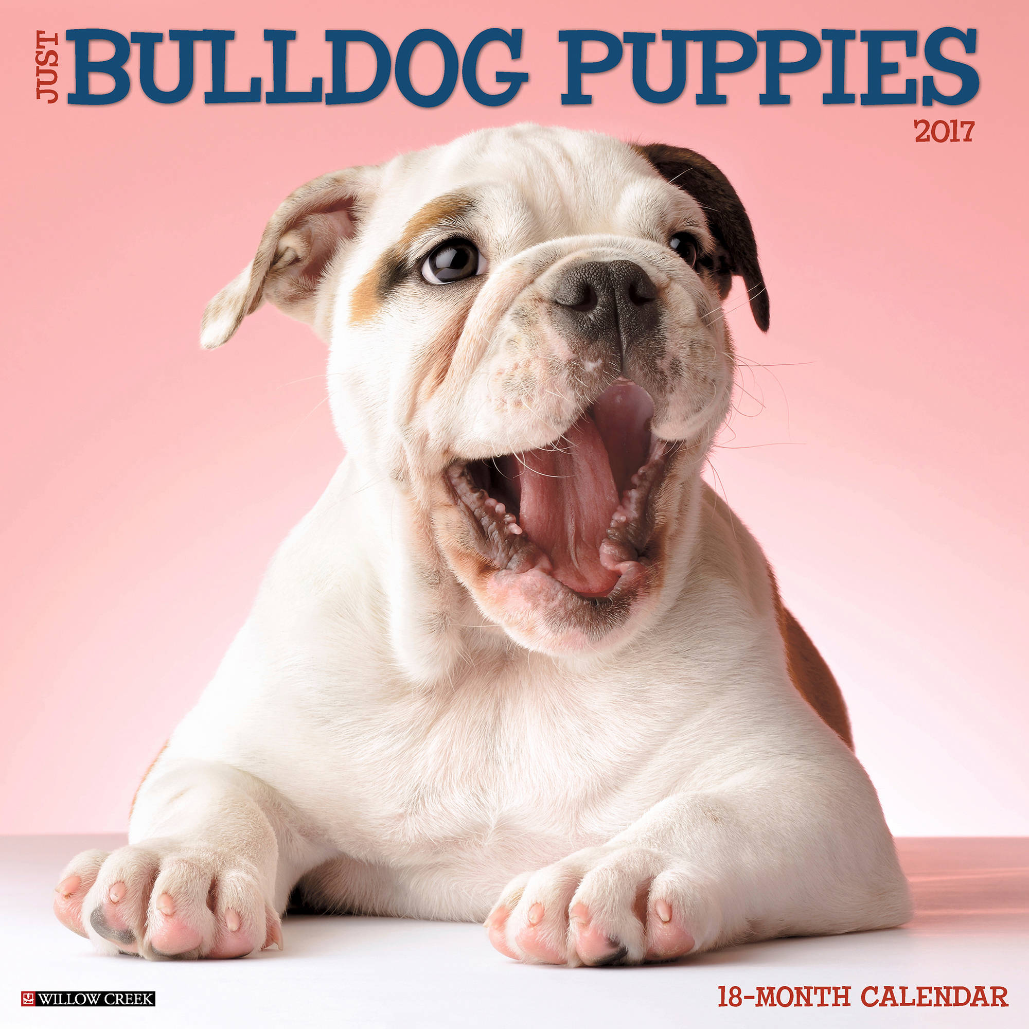 2017 Just Bulldog Puppies Wall Calendar