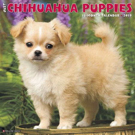 Puppies Wall Calendar - Willow Creek Press 2019 Just Chihuahua Puppies Wall Calendar