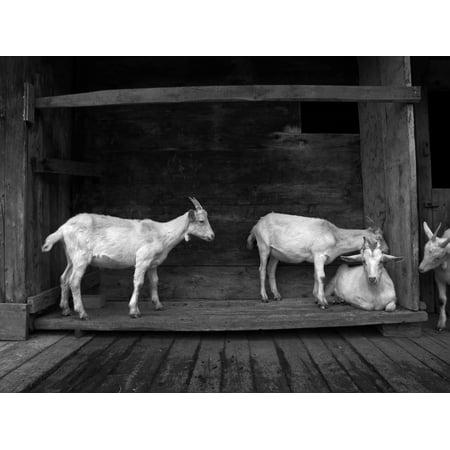 Framed Art for Your Wall Hair Horn Goat House Horns Animal 10x13 Frame