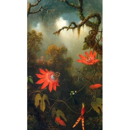 Blue Passion Vine - Two Hummingbirds Perched On Passion Flower Vines Poster Print by  Martin Johnson Heade