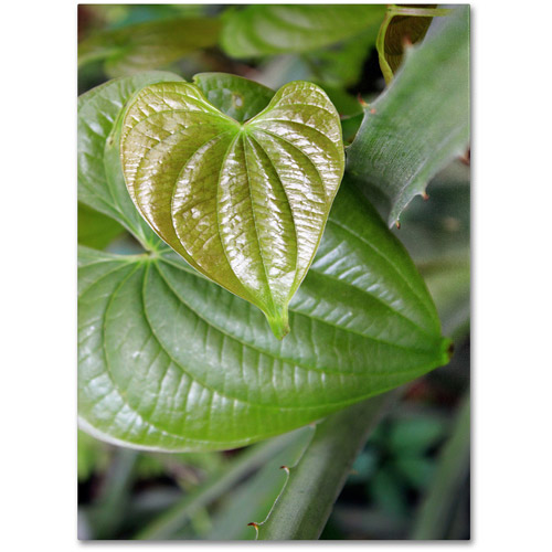 "Trademark Fine Art ""Natural Hearts"" Canvas Wall Art by Patty Tuggle"