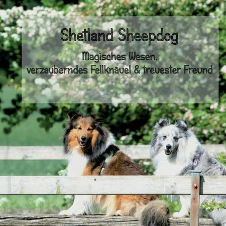 Shetland Sheepdog - Magisches Wesen, bezauberndes Fellknäuel und treuster Freund - eBook