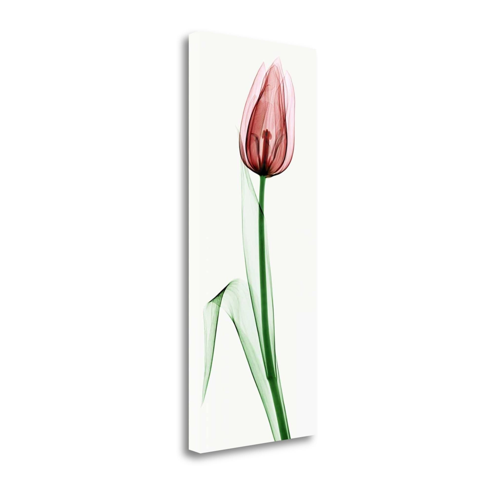 Tangletown Fine Art Tulip Ii Graphic Art Print On Wrapped Canvas Walmart Com Walmart Com
