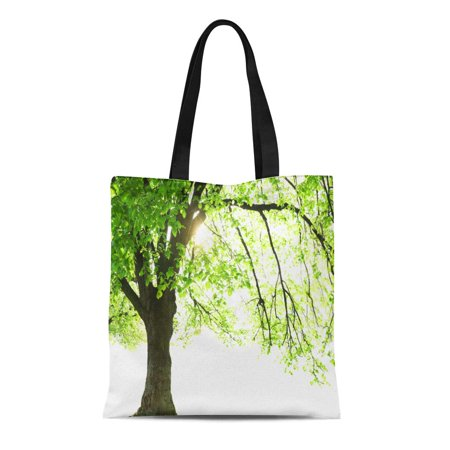 ASHLEIGH Canvas Tote Bag Green Big Tall Tree Majestic Old Beautiful Botanic Botanical Reusable Shoulder Grocery Shopping Bags Handbag