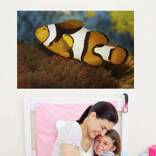 Wallhogs Clown and Anenome Poster Wall Mural