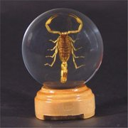 Ed Speldy East GL02 Real Bug Insect Globes-small-Scorpion