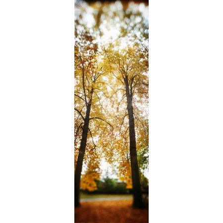 Autumn Trees in a Park, Volunteer Park, Capitol Hill, Seattle, King County, Washington State, USA Print Wall