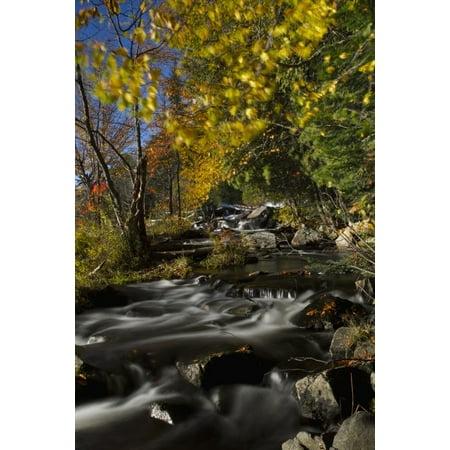 Alqonquin Provincial Park In Autumn Ontario Canada Canvas Art - John Bennett  Design Pics (11 x 17)