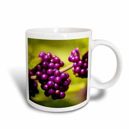 3dRose Very Berry, Ceramic Mug, 11-ounce