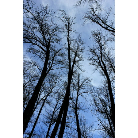 LAMINATED POSTER Tree Nature Trees Sky Silhouette Blue Forest Poster Print 24 x 36
