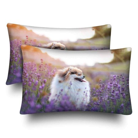 GCKG Hot Summer Little Dog Lavender Field Pillow Cases Pillowcase 20x30 inches Set of 2 - image 4 of 4