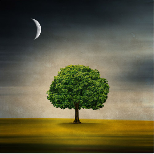 "Trademark Fine Art ""Under the Moon"" Canvas Art by Philippe Sainte-Laudy"