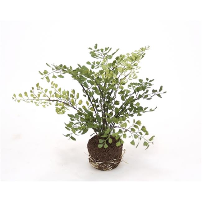 Distinctive Designs DG-619 Silk Maiden Hair Fern in Soil - Pack of 6