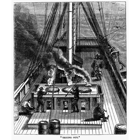 Whaling Trying Out 1874 NTry-Works Or Boilers Set In Brick On The Deck Are Used To Reduce The Whale Blubber To Oil In The Process Called Trying Out Wood Engraving American 1874 Rolled Canvas Art -  (2