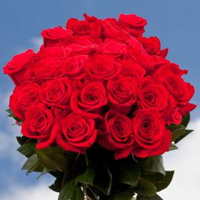 globalrose 50 fresh cut birthday red roses long stem flowers for