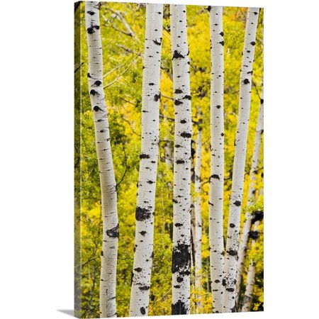 Great Big Canvas Yves Marcoux Premium Thick Wrap Canvas Entitled Aspen In Autumn  Jasper National Park  Alberta  Canada