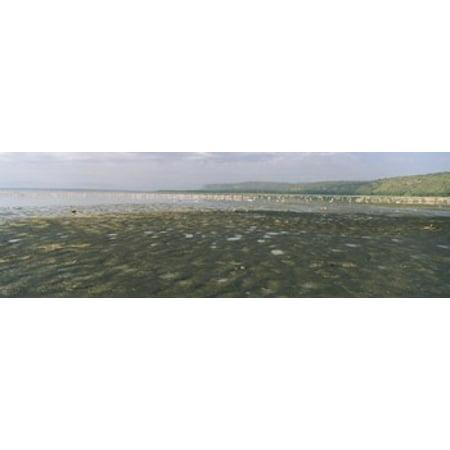 Flock Of Flamingos In A Lake Lake Nakuru Great Rift Valley Lake Nakuru National Park Kenya Poster Print