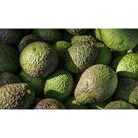 Avocado Fruit (Canvas Print Picked Avocados Harvest Green Fruit HASS Avocado Stretched Canvas 10 x)
