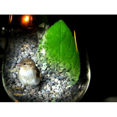 Laminated Poster Sparrow Sperling Bird Glass Photo Montage Poster Print 11 x 17](Montage Photo Halloween)