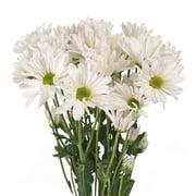 Natural Fresh Flowers - White Daisies, 60 Stems