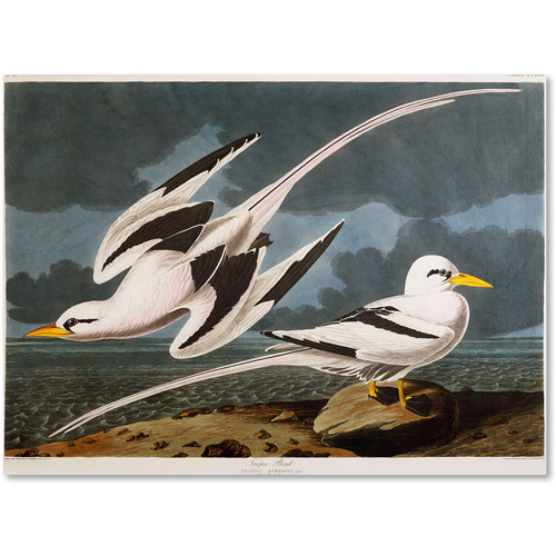"Trademark Fine Art ""Tropic Bird"" Canvas Art by John James Audubon"