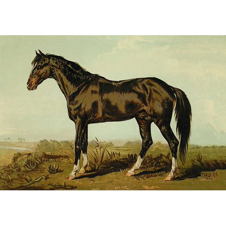 Dongola Horse 1900 Stretched Canvas - Samuel Sidney (12 x 18)