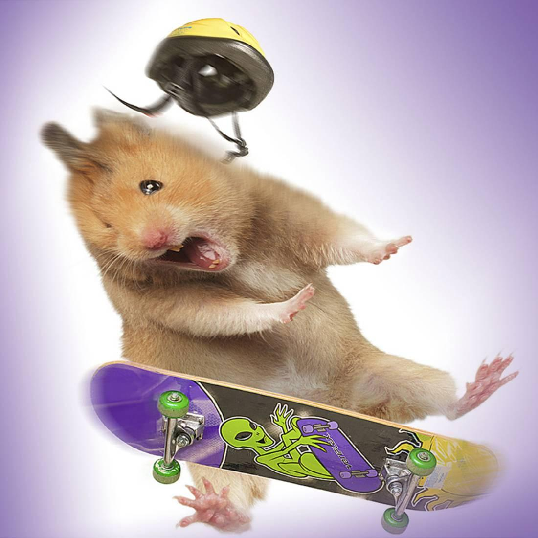 Hamster with Skateboard and Helmet Print Wall Art