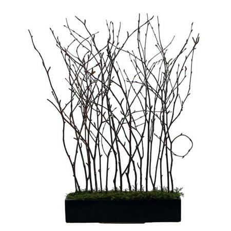 Vickerman Natural Birch Branches In Black Rectangle Pot