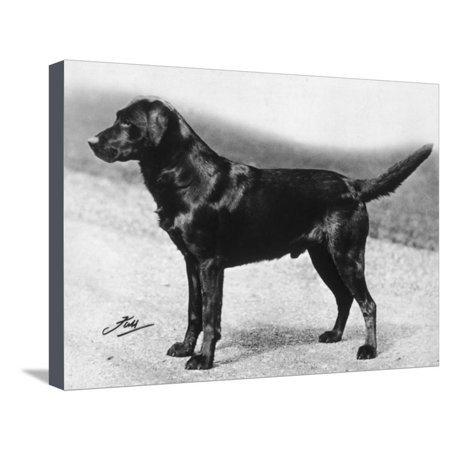 Dual Champion Bramshaw Bob Crufts, Best in Show, 1932 and 1933 Stretched Canvas Print Wall Art By Thomas