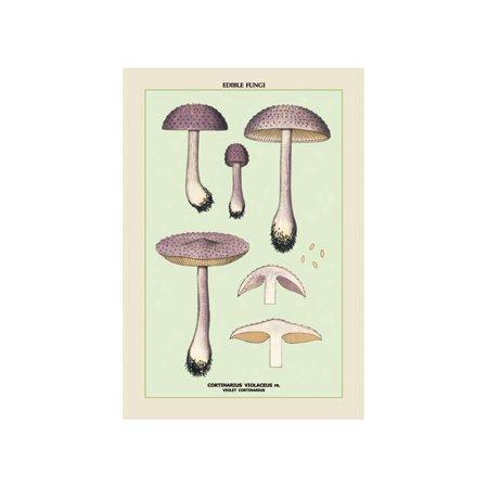Edible Fungi: Violet Cortinarius Print (Unframed Paper Print 20x30)
