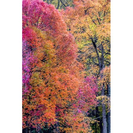 Jay Park Halloween (USA, Virginia, Mclean. Scenic in Great Falls State Park Print Wall Art By Jay)