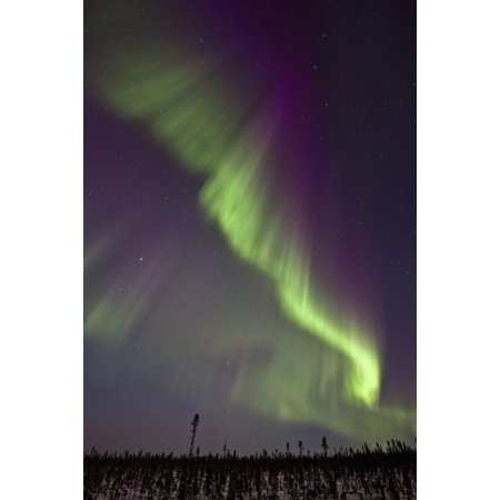 Aurora Borealis Or Northern Lights Over The Eagle Plains Dempster Highway Yukon Stretched Canvas - Robert Postma  Design Pics (22 x 34) ()