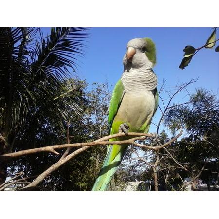 Canvas Print Sky Bird Parrots Tree Stretched Canvas 10 x 14