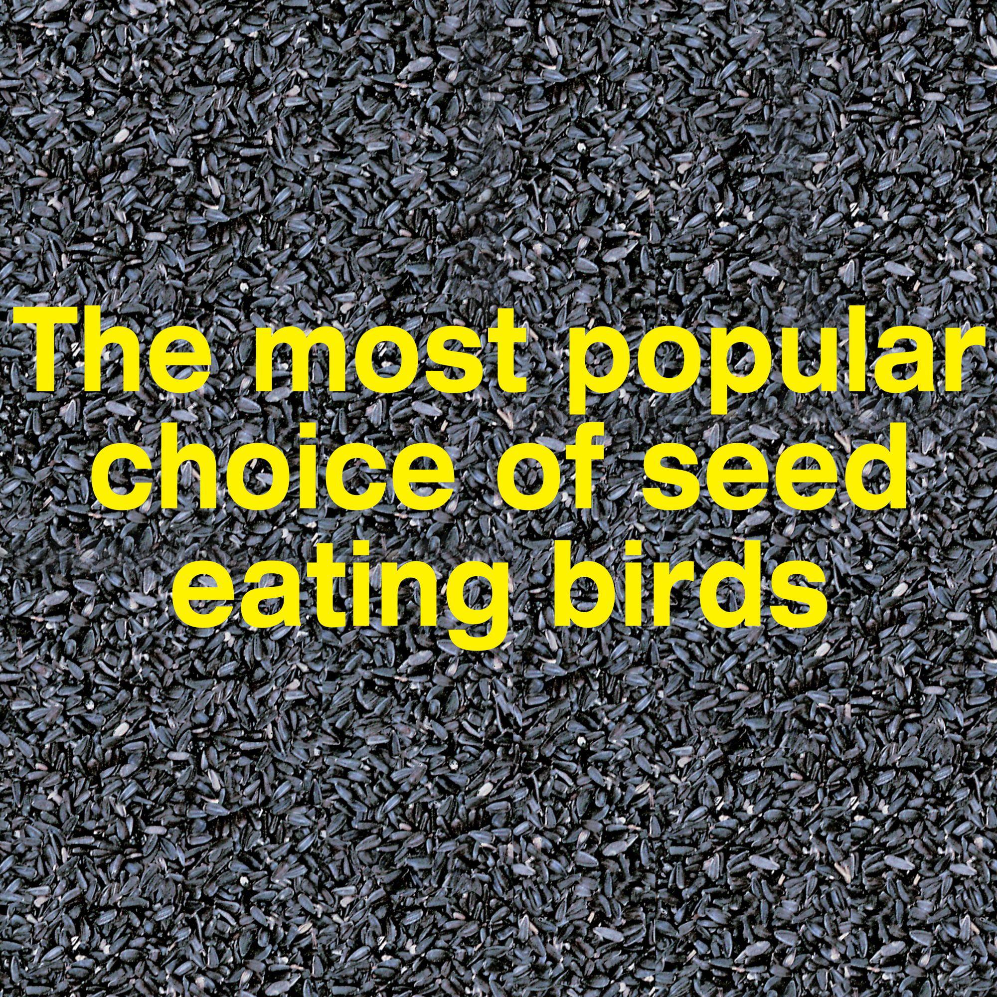WILD BIRD FEED FOOD SEED 20 Lbs Pennington Black Sunflower Feeder Garden Pet Bag