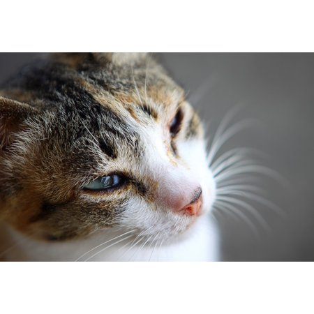 Fun Center Cat - Framed Art for Your Wall Cat Fun Cute Single Cute Cat 10x13 Frame