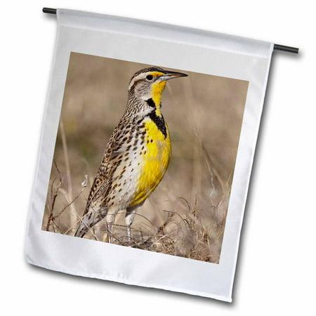 3dRose Western Meadowlark bird, Oklahoma - US37 LDI0029 - Larry Ditto - Garden Flag, 12 by 18-inch](Larry Bird Wig)
