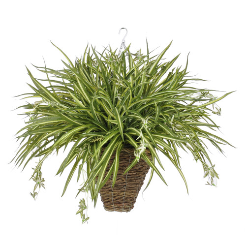 House of Silk Flowers Inc. Artificial Spider Hanging Plant in Square Basket