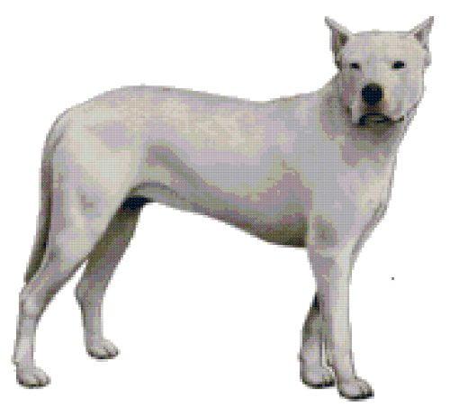 Dogo Argentino Dog Counted Cross Stitch Pattern