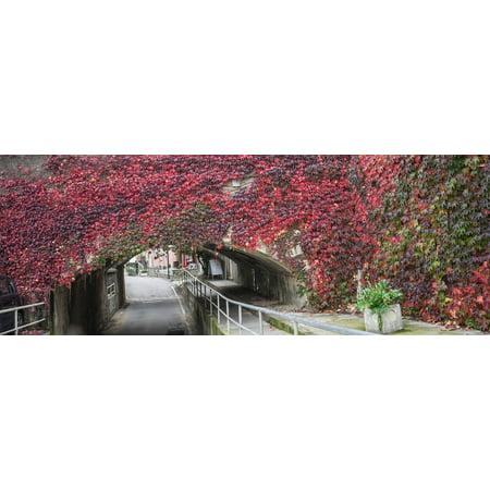 LAMINATED POSTER Bridge Arch Plants Underpass Bend Vines Flowers Poster Print 24 x - Halloween Vine Arch