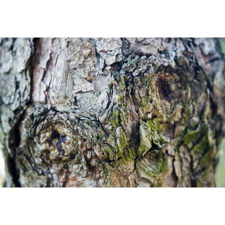 Wood Dead Eye - LAMINATED POSTER Era Memory Tree Wood Dead Wood Memories In My Eyes Poster Print 24 x 36