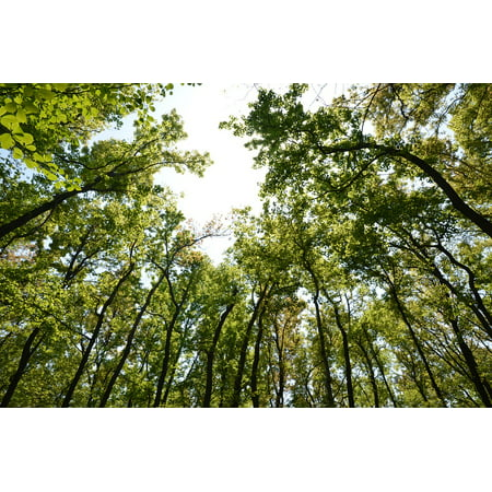 - Peel-n-Stick Poster of Leaf Woods Oxygen Green Forest Spring Poster 24x16 Adhesive Sticker Poster Print