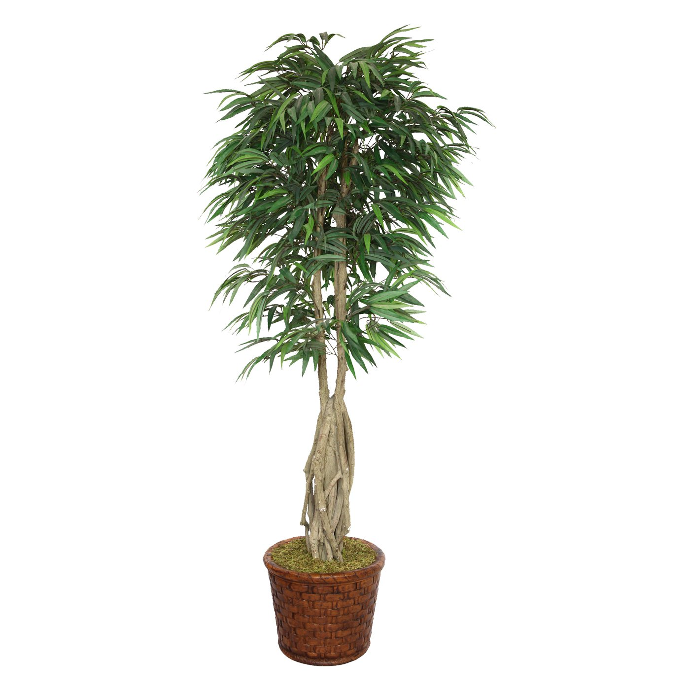 83-in Tall Willow Ficus with Multiple Trunks in 17-in Fiberstone Planter