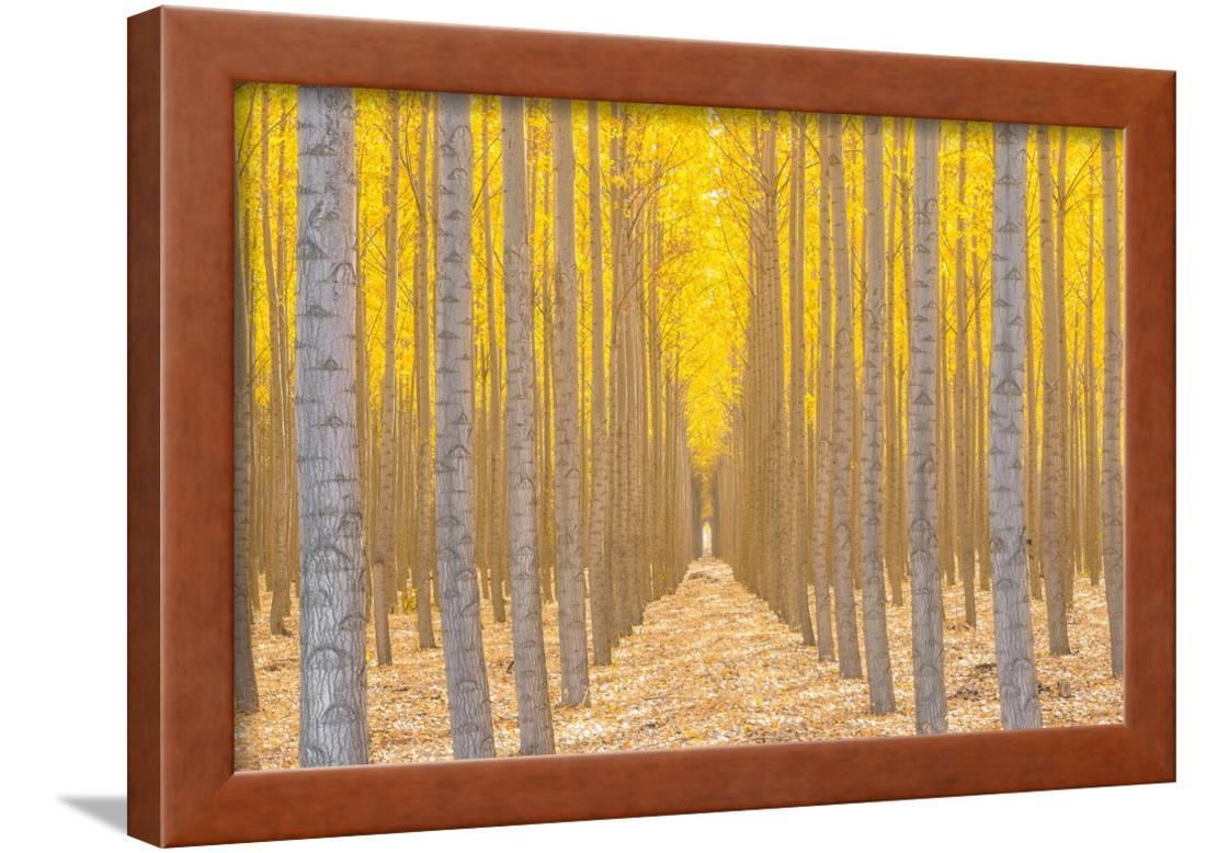 Silence Is Golden Framed Print Wall Art By Ross Lipson - Walmart.com