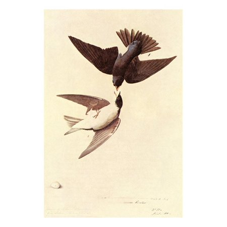Tree Swallow Print Wall Art By John James - John Tree