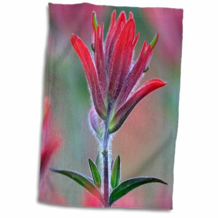3dRose Indian Paintbrush, Scarlet Paintbrush, Flower - NA01 FZU0004 - Frank Zurey - Towel, 15 by 22-inch - Paul Frank Towel