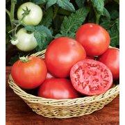 Bonnie Plants Bush Goliath Tomato Image 5 Of 7